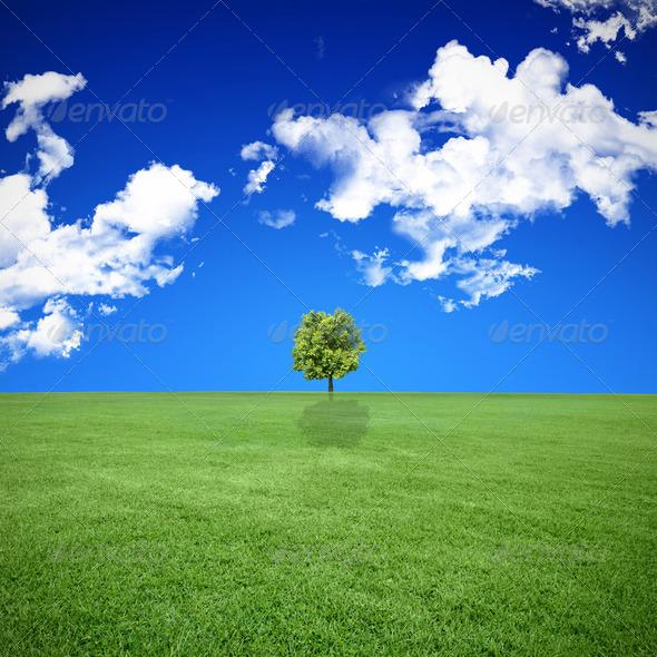 PhotoDune landscape 2188847