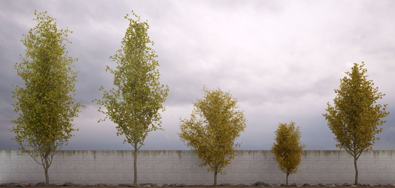 50 Low Poly Trees For 3Ds Max & Vray By 3DTrees
