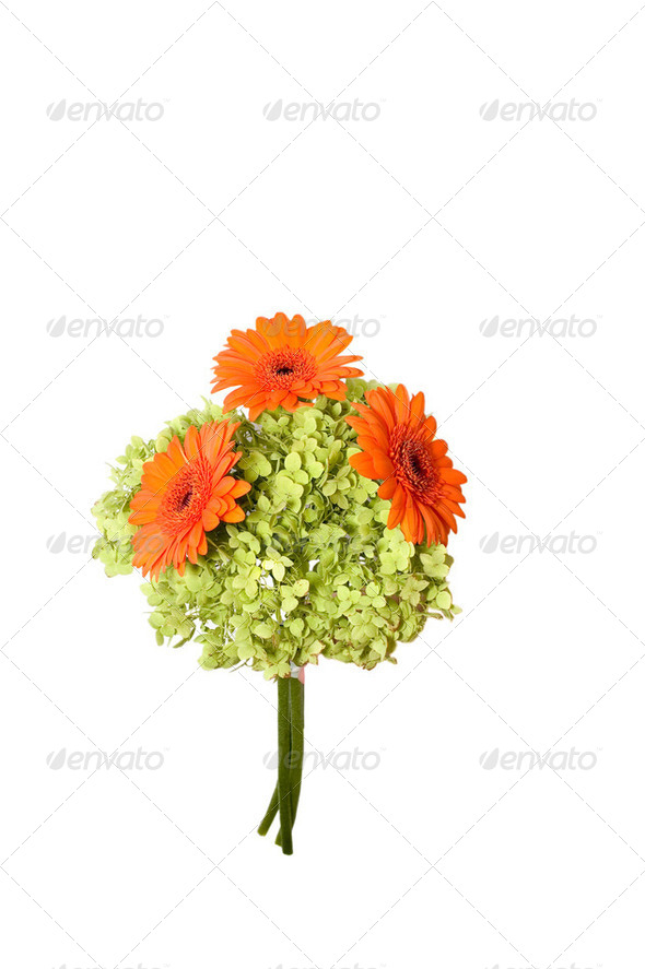 Bunch of flowers, isolated on white. - Stock Photo - Images