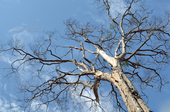 old dry tree on a cloudy sky - Stock Photo - Images
