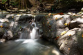 Water in Jungle Long Time Exposure - PhotoDune Item for Sale