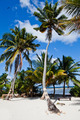 Palmtrees on Island - PhotoDune Item for Sale