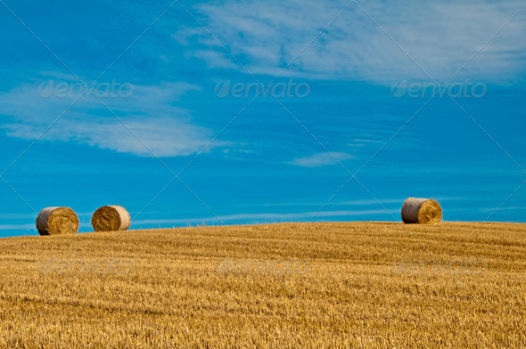 PhotoDune bale of straw with a blue sky 3883691