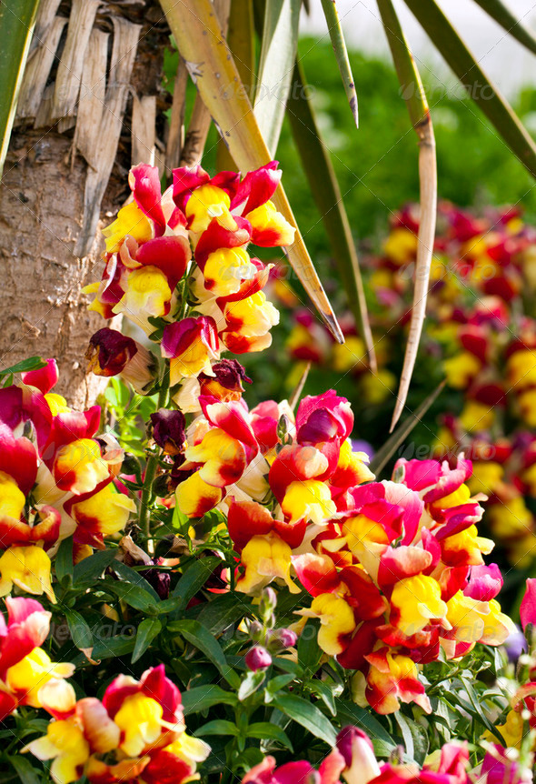 Flowers - Stock Photo - Images