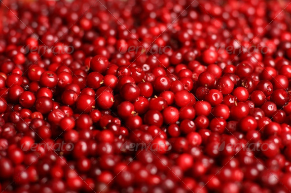 Cowberry background. - Stock Photo - Images