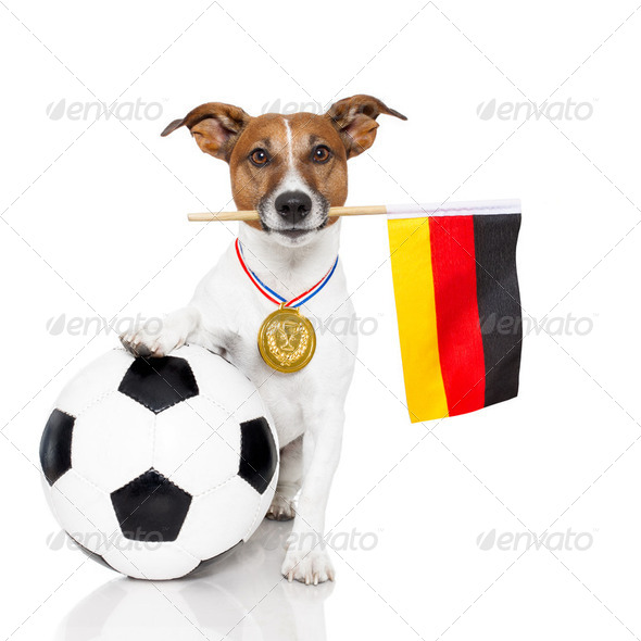 dog as soccer with medal and  flag - Stock Photo - Images