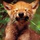 redwolf1430