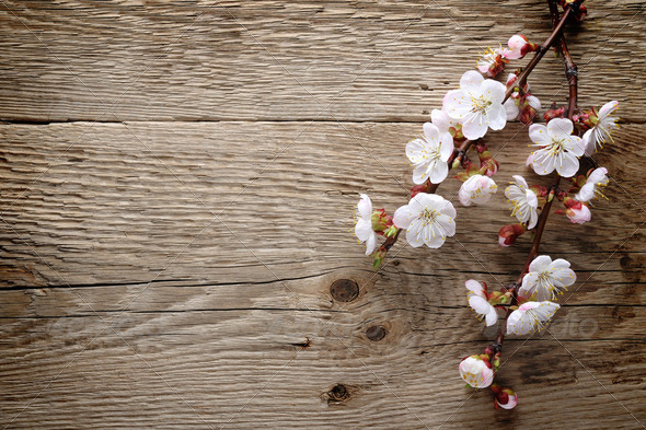 Spring blossom on wood background - Stock Photo - Images