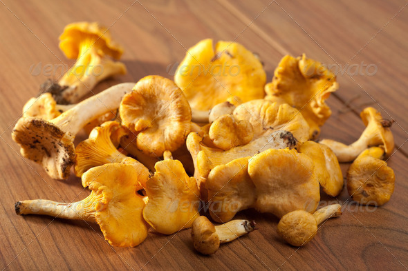 fresh chanterelle mushrooms - Stock Photo - Images