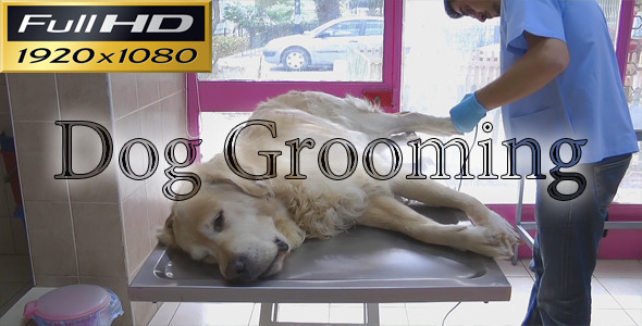 Dog Grooming Timelapse FULL HD