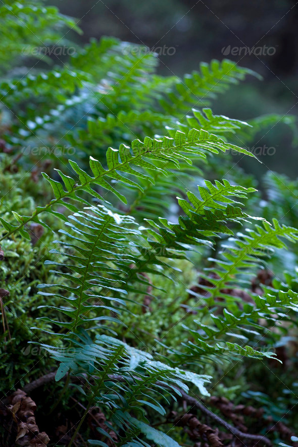 Wild fern - Stock Photo - Images
