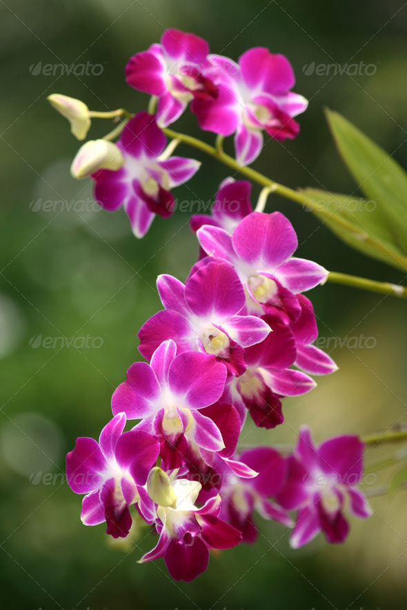 Pink orchid in a garden - Stock Photo - Images