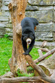 Sun Bear - PhotoDune Item for Sale