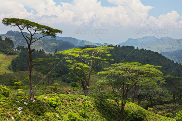 Sri Lanka landscapes - Stock Photo - Images