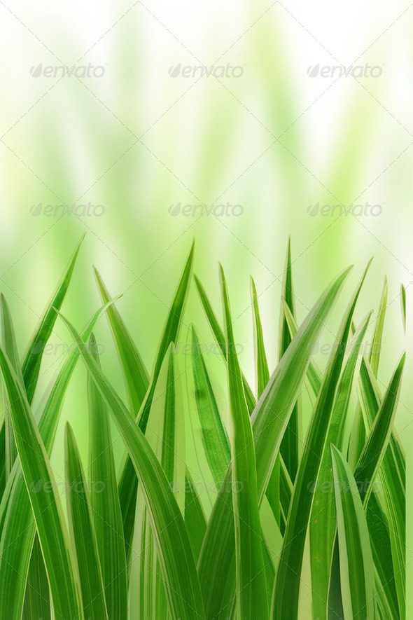 grass on white background - Stock Photo - Images
