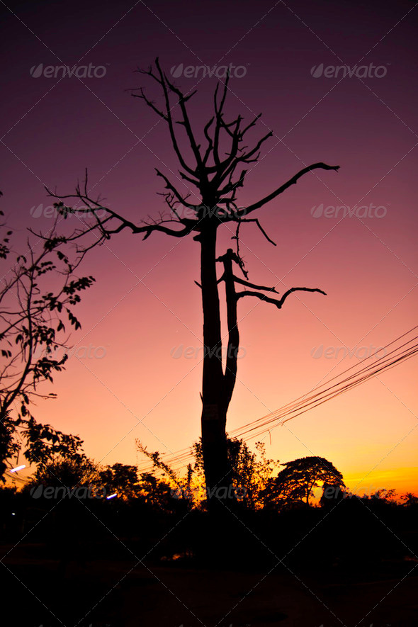 The tree at the magic hours - Stock Photo - Images