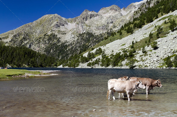 Aiguestortes Lake National Park - Stock Photo - Images