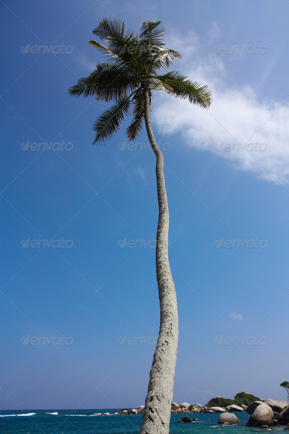 Palm. Caribbean beach with tropical forest. Tayrona National Park. Colombia - Stock Photo - Images