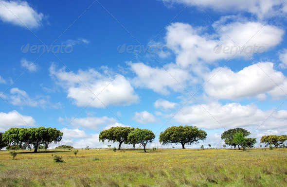 Oak trees at alentejo field - Stock Photo - Images