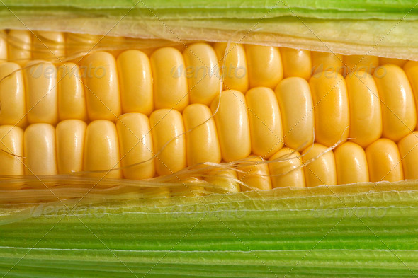 Corn with green leaf - Stock Photo - Images