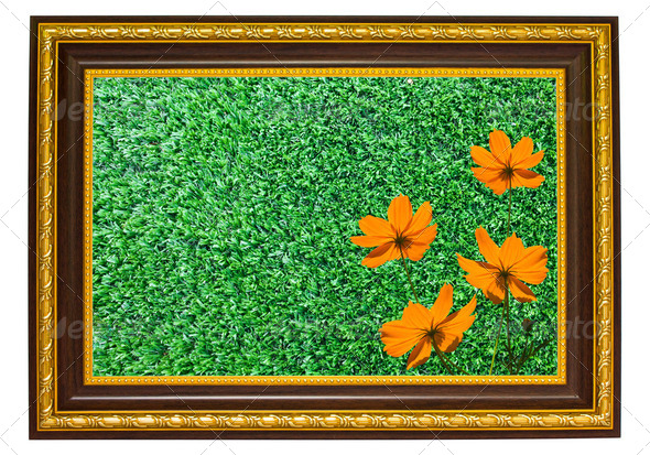 the orange flowers and green turf in wooden frame - Stock Photo - Images