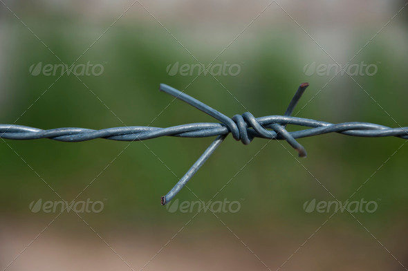 Barbed wires - Stock Photo - Images
