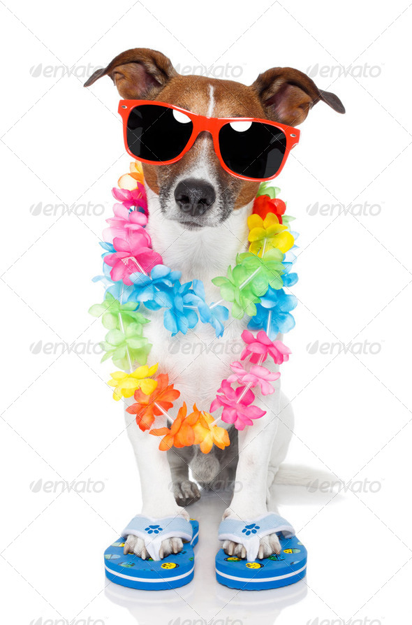 tourist dog with hawaiian  lei and shades - Stock Photo - Images