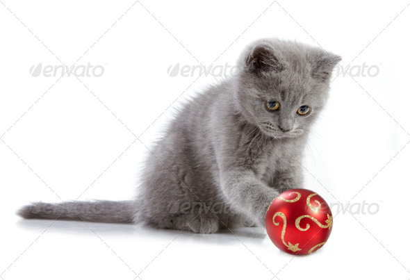 kitten and christmas baubles - Stock Photo - Images