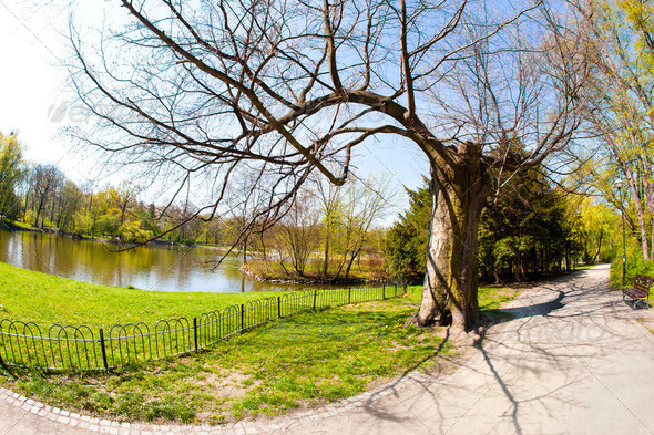 Spring time in park - Stock Photo - Images