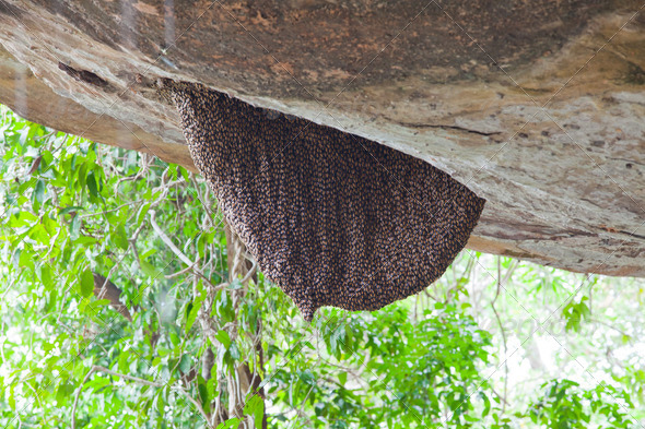 honey bee swarm - Stock Photo - Images