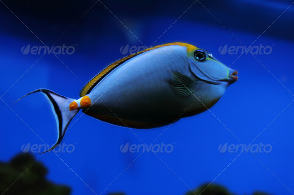 exotic sea fish - Stock Photo - Images