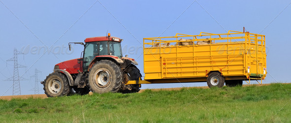 livestock transport - Stock Photo - Images