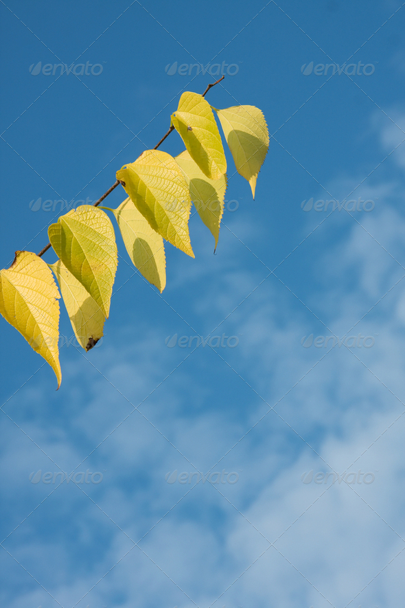 Autumn branch - Stock Photo - Images
