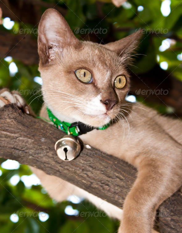 Cat photo - Stock Photo - Images