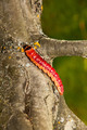 The big, bright beautiful caterpillar creeps on an apple-tree trunk - PhotoDune Item for Sale