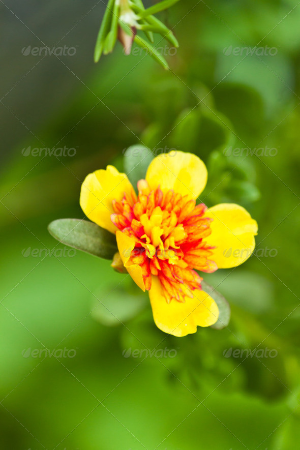 beautiful spring flowers - Stock Photo - Images