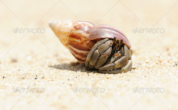 Hermit Crab on a beach - Stock Photo - Images