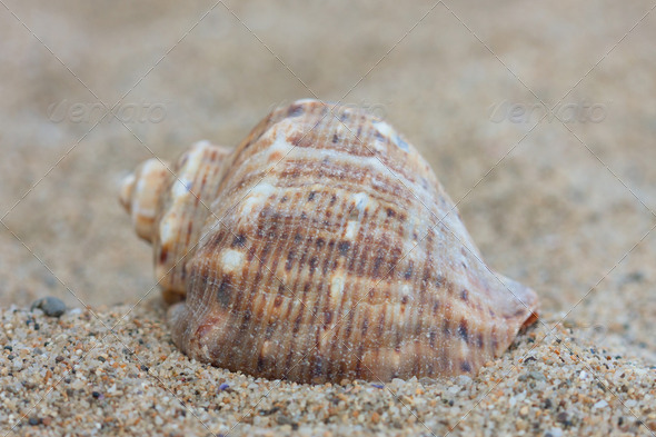 Shell 2 - Stock Photo - Images