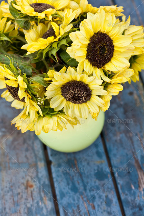 Fall Sunflowers - Stock Photo - Images