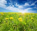Sunsplashed meadow - PhotoDune Item for Sale