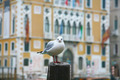 Seagull on Pole - PhotoDune Item for Sale