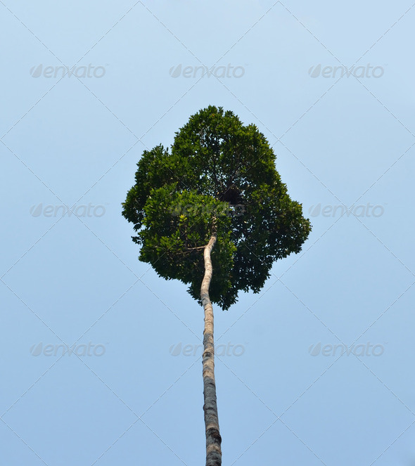 big tree in tropical rain forest, Asia - Stock Photo - Images