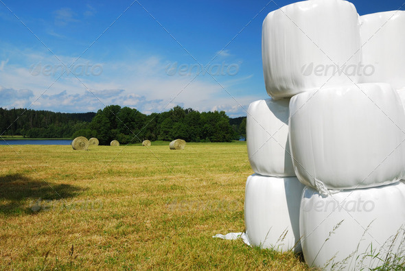Gathered field with straw bales packaged - Stock Photo - Images
