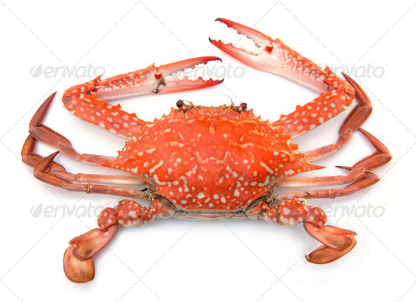 Red crab isolated on white background - Stock Photo - Images