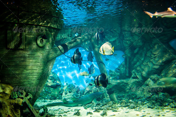 oceanarium - Stock Photo - Images