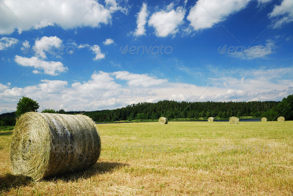 Gathered field with straw bales - Stock Photo - Images