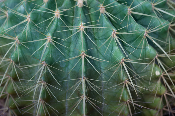 Cactus - Stock Photo - Images