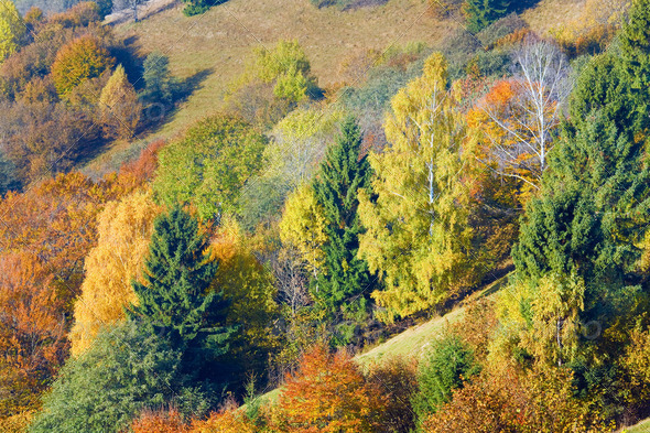 autumn mountain forest - Stock Photo - Images