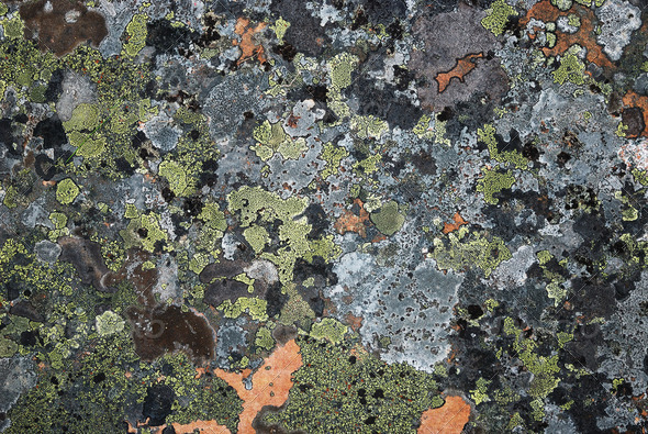 Surface stone with many-coloured moss - Stock Photo - Images