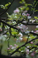 Wild tree flowers - PhotoDune Item for Sale